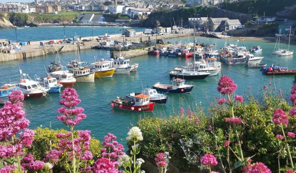 flowers at Newquay