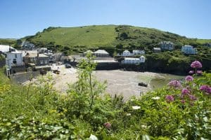 Porth Isaac flowers