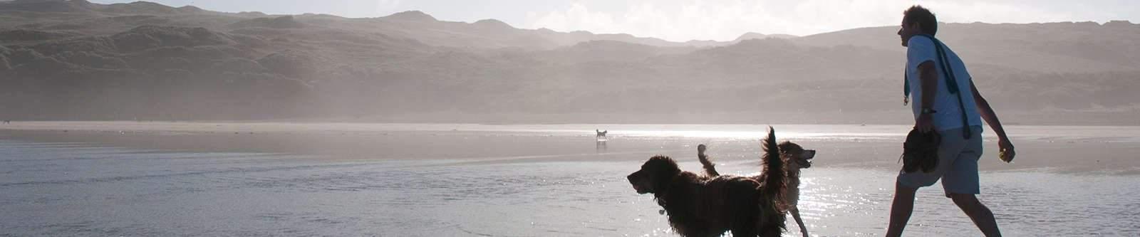 man walking dogs on beach