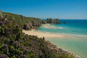 purple flowers at Porthcurno