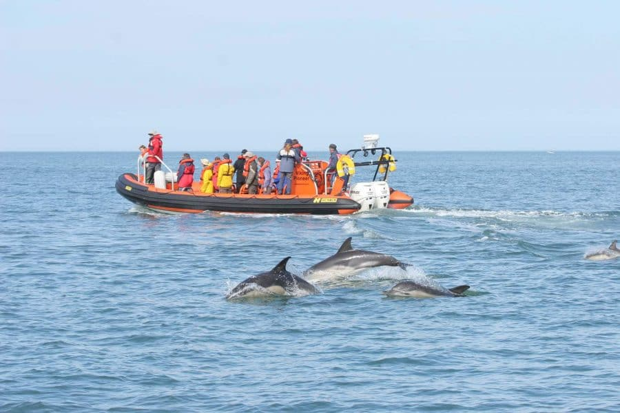 dolphin spotting on a sea safari
