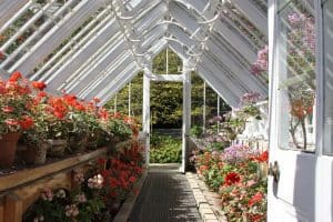 Inside view of Victorian Greenhouse