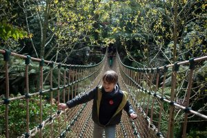 Jungle rope bridge