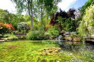 beautiful pond at Pinetum