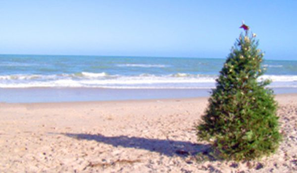 Christmas tree on a beach